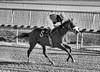 "2017-12-26 (65) r3 Elvis Trujillo on #6 Enterprise Value - monochrome (JLeeFleenor) Tags: photos photography ""laurel park"" maryland md ""maryland races"" horse jockey جُوكِي ""赛马骑师"" jinete ""競馬騎手"" dżokej jocheu คนขี่ม้าแข่ง jóquei žokej kilparatsastaja rennreiter fantino ""경마 기수"" жокей jokey người horses thoroughbreds equine equestrian cheval cavalo cavallo cavall caballo pferd paard perd hevonen hest hestur cal kon konj beygir capall ceffyl cuddy yarraman faras alogo soos kuda uma pfeerd koin حصان кон 马 häst άλογο סוס घोड़ा 馬 koń лошадь laurelpark marylandraces races outdoors outside winter cold"