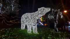 Lo Zoo che Vorrei (The Zoo I'd Want) (Mr. Bamboocha) Tags: 2017 bear italia italy lozoochevorrei lucidartista lucidartista2017 orso orsopolare polarbear salerno thezooidwant villacomunale it
