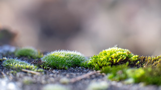 Mossy winter...