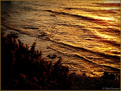 Vagues mourantes à l'aube (bleumarie) Tags: cerbère pyrénéesorientales suddelafrance roussillon catalogne mer méditerranée mariebousquet nature bleumarie paysage littoral littoralméditerranéen leverdesoleil soleillevant levant aube aurore pointdujour plage vague eau météo mars2017 printemps