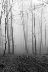 weißermatsch (tryh.) Tags: nebel fog deister black white mtb