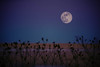 Last Day of the Year (Just Add Light) Tags: 2018 beauty 2017 color purity memories justaddlight wisconsin newyearseve2017 fullmoon moon gnas hope country riural