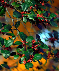 """Cincinnati – Spring Grove Cemetery & Arboretum """"Holly Berries In Autumn"""" (David Paul Ohmer) Tags: ohio cincinnati spring grove cemetery arboretum springgrovecemetery gravesites burial grounds death spirit soul deceased graveyard conservatory victorian gothic revival national historic landmark adolph strauch cemetary autumn fall berries holly"""