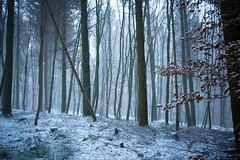 snow flurry (hejakma) Tags: snow forest woods mist hejakma