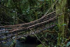 The cane bridge (Sven Rudolf Jan) Tags: tari papua new guinea rainforest bridge canebridge
