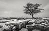 Winskill Stones. (antonyrowlandsphotography.com) Tags: winskillstones yorkshiredales limestones wintersscene landscape