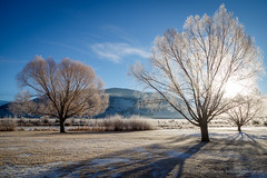 1T9A9285 (johncarney) Tags: america frost jacksonhole unitedstates usa wyoming
