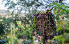 _DSC6204 (xav_roberts) Tags: nikon nikonv1 nikkor dof moss lichen nature funghi rust autumn wintersun moisture dew morningdew outdoor countryside rural plants nikkon1 nikkor32mm nikonft1 sigma105mmf28 sigma105mm sigma