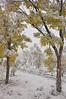 Autumn Snowfall - 8786b+ (teagden) Tags: autumn snowfall fall fallcolors fallingsnow snow snowing snowstorm snowflakes snowy autumncolors autumnscene winterinautumn fallleaves jenniferhall jenhall jenhallphotography photography nikon scenic nature naturephotography landscape landscapephotography wyoming wyominglandscape buckrail fence buckrailfence fallsnowstorm