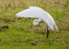 (Luuuuke M) Tags: birds hersey nature naturereserve wildlife