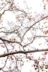 IMG_7112b (Arthur Pontes) Tags: inverno winter pb black white blackandwhite bw árvore tree galho nervos nervo contraste preto branco pretoebranco avião céu sky nature natureza planta textura malha estampa deepoffield deep 50mm pentacom caminho rio river mapa path trilha outono fall portugal lisboa