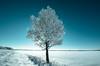 Winter Tree (fsjmanu) Tags: 1424mm 2017 d600 december tree winter vanderhoof britishcolumbia desolate