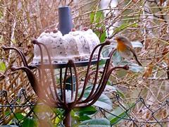 A Christmas Gift for the Birds (BrigitteE1) Tags: rotkehlchen robin vogelfutterkuchen birdfeedcake bremen germany bird vogel