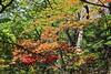 Autumn colours in Kumgangsan National Park (Timon91) Tags: dprk north korea democratic peoples republic noordkorea noord nordkorea 조선민주주의인민공화국 kim juche chosun communism