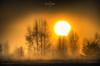 Sun burning the fog (nigel_xf) Tags: sun sunrise sonnenaufgang nebel fog foggy wissel wisselerdünen kalkar kleve niederrhein nigel nigelxf nikon d750 vsfototeam landscape landschaft natur nature yellow orange gelb