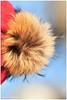 DEC_4877ed (jpf44hp2) Tags: furry target weather warmer
