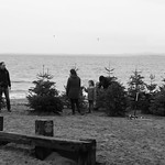 beach of trees thumbnail