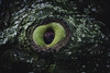 nature´s watching you   l   2018 (weddelbrooklyn) Tags: nature tree eye eyes herrderringe ent ents grün nikon d5200 35mm astloch baumrinde flehend natur baum bäume auge augen lordoftherings lotr green boughhole bark pleading pleadingly trees hdr
