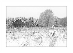 Fresh Snow (DJ Wolfman) Tags: snow white black farm barn blackandwhite bw ottawacounty olympus olympusomd em1markii 12100mmf4zuiko zuiko zd michiganfavorites michigan