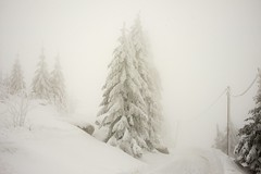 Winter Forest In The Fog (sigiha1953) Tags: winter wald forest schnee snow bayern bavaria nebel fog baum tree