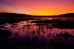 Sunrise, New Years Day, Owens Lake (DM Weber) Tags: owens lake creek stream sunrise california landscape psa148 dmweber canon eos5dmk2