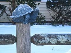 post turtle on a fence (muffett68 ☺ heidi ☺) Tags: postturtle politicians hff fencefriday fence turtle