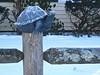 post turtle on a fence (muffett68 ☺ heidi ☺) Tags: postturtle politicians hff fencefriday fence turtle