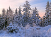 Stendafjellet (2000stargazer) Tags: stendafjellet fana bergen norway winter winterwonderland snow forest light landscape nature canon