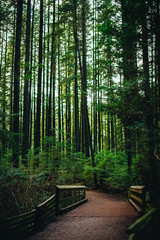 Bridge to Elsewhere (Viv Lynch) Tags: canada britishcolumbia vancouver vancity westcoast pacificspiritregionalpark forest park trees outdoor hiking bc pacific nature