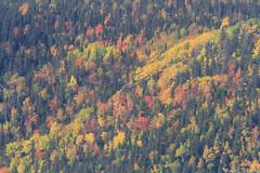 Couleurs d'automne (rejeanjdeschenes) Tags: automne chasse montlouis