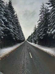On the road to the Brenig Lake (paulstead2) Tags: firtrees northwales winter snowscape llynbrenig denbighshire breniglake