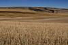 October Alberta Fields (pokoroto) Tags: october alberta fields アルバータ州 canada カナダ 10月 十月 神無月 かんなづき kannazuki themonthwhentherearenogods 平成29年 2017 autumn