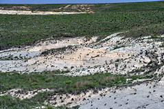 Chalk badlands (Niobrara Formation, Upper Cretaceous; outcrop along Castle Rock Road, Gove County, Kansas, USA) 10 (James St. John) Tags: smoky hills chalk member niobrara formation cretaceous gove county kansas castle rock road chalks