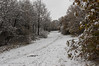 The Snowy Track (M C Smith) Tags: eppingforest path pentax k3 branch bushes green trees white footprints