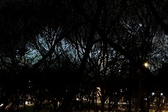 Darkest day, longest night (mikael_on_flickr) Tags: darkdaylongnight dark buio darkness mørke dunkel night notte nat nacht hellenacht ferrara trees alberi park parco licht luce light abstract asttatto abstrakt winter inverno vinter hiver