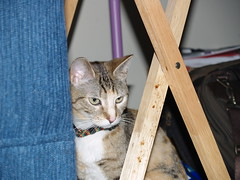 private 017 (lorablong) Tags: westhollywood california cat pet twix