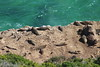 Seal Colony (Rckr88) Tags: robbergnaturereserve plettenbergbay southafrica robberg nature reserve plettenberg bay south africa seal colony sealcolony seals sea water ocean wave waves coast coastline coastal coastlines rockycoastline cliff cliffs marinelife marine animals animal sealion robbergbeach robberghikingtrail naturalworld outdoors travel travelling explored 27th december 2017 explored27thdecember2017 27thdecember2017 explore inexplore