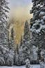 El Capitan crowned in fog (Chief Bwana) Tags: ca california yosemite yosemitenationalpark nationalparks elcapitan forest snow winter vertical psa104 chiefbwana