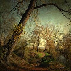 #Quiet Resource (graceindirain) Tags: river path textured trees graceindirain