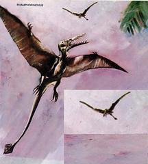 Rhamphorinchus (Count_Strad) Tags: dinosaur dinosaurs reptiles bird birds dino art fossil
