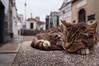 • The Guard (LauLópez) Tags: cat gato animal cementerio cementery sleep dormir descansar rest graves tombs bench tumba death muerte end fin colours colores paws patas nikon