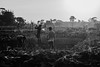 Time to quench! (Ajwad Mohimin) Tags: people workers workplace farmland farm paddy golden harvest bangladesh bangladeshi