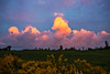Colourful Cumulus Congestus (Matt Molloy) Tags: mattmolloy photography sunset sky colourful clouds fluffy orange pink cumulus congestus yellow flowers goldenrod field trees seeleysbay ontario canada landscape nature countryside lovelife