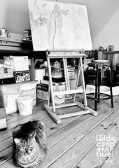 Carol-Cillo-9 (pawildsmade) Tags: creative makers clintoncounty artisan painting