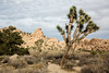 Joshua Tree National Park - Hidden Valley (waynengphotography) Tags: joshuatreenationalpark joshuatree jtnp