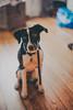 Lou (mripp) Tags: art vintage old animal animals dog dogs tiere tier hund leica m10 summilux 50mm