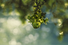 One (charhedman - on and off) Tags: moss beforewegotsnow raindrop waterdroplet green blue bokeh nature