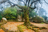 Tree of the Capuchos III (J C Mills Photography) Tags: portugalsintra monastery conventodoscapuchos tree magical mist autumn fall entrance boulders moss ferns landscape