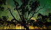 night lights (andrew.walker28) Tags: light pollution trees stars starscape night long exposure