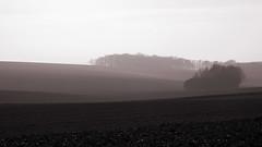 Miss Terre (Emmanuelle2Aime2Ailes) Tags: landscape sépia monochrome 7dwf